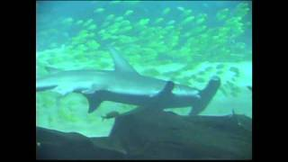 """""""The Hammerhead Shark And The Sawfish"""" by Brent Holmes"""