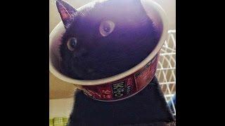 Twitterに投稿された、爆笑おもしろ動物画像まとめ!?Funny animal♡ <...