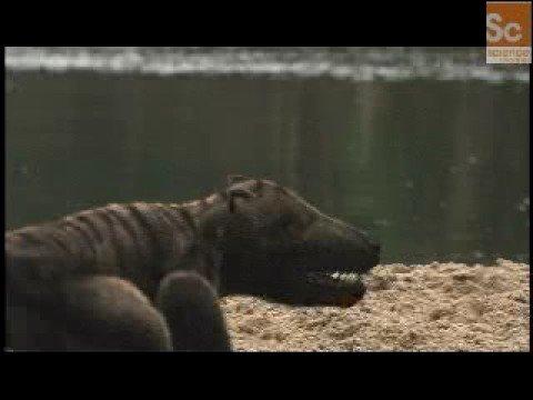 Mammals Vs. Dinos- Dinosaur Hunting