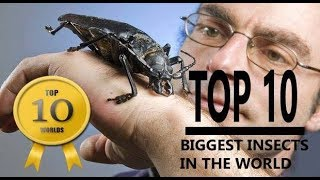 Top 10 Biggest Insects in the world 2018 | Top 10 Worlds