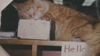 Dewey Readmore Books - Cats of Iowa