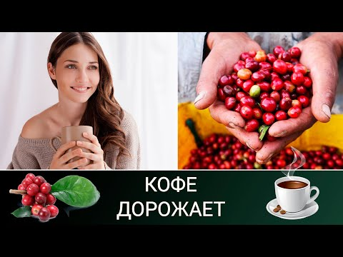 Кофе: от импорта к экспорту / Кофе на Руси / Кофейное дерево в квартире
