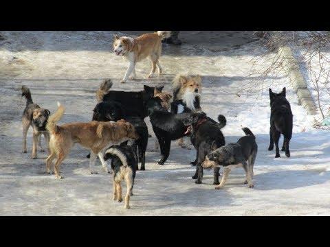 Отпугиватель Бродячих Собак.Пробуем на деле,большой тест.Dog Repeller.