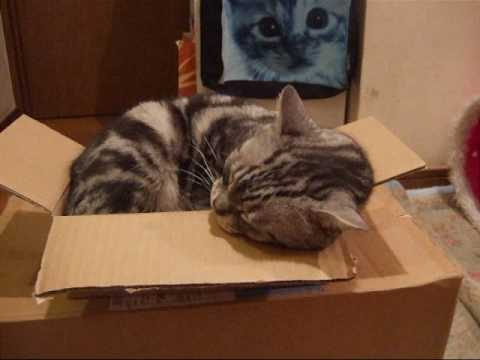 Download 箱と猫② Box & Cat ②