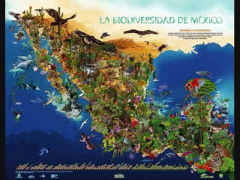 Biodiversidad de m xico en peligro youtube for Importancia economica ecologica y ambiental de los viveros forestales