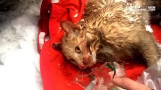 Спасенный кот
