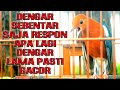 Anis Merah Baru Denger Sebentar Langsung Respon  Mp3 - Mp4 Download