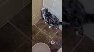 목욕이 싫은 고양이 꽁…