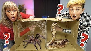 What's in the BOX Challenge!!!!!!! (ANIMALS)