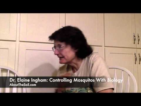 Elaine Ingham on Mosquito Control with Biology
