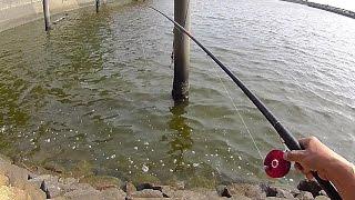 名古屋港 黒鯛 落し込み 前打ち2 黒鯛釣り