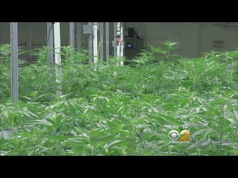 NJ Bill To Legalize Pot