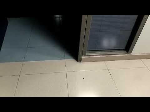 WhatsApp Video 2017 08 14 at 11 10 30