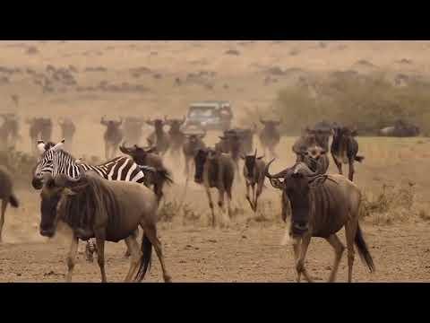 Jak vypadá velká africká migrace? Marika s Davidem ji pro vás natočili