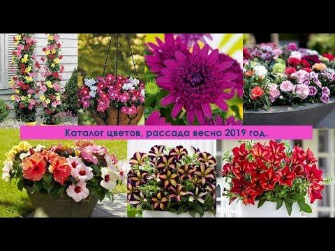 Цветы, рассада, каталог весна  2019 год.