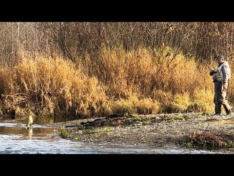 Float Fishing With Centerpin For Chum Salmon On The Green River | 11.22.18