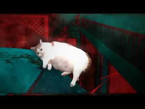 Stranger Cats (Jumping orange cat from car) Most funny 2018