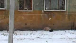 ЗА ХЛЕБОМ ВЫШЛА.....))).mp4(Наблюдаю картину из дома на против! Тетка выносит лестницу от двух ярусной детской кровати, привязывает..., 2012-01-03T14:29:48.000Z)