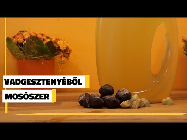 Így készíts vadgesztenyéből mosószert | Jövő TV