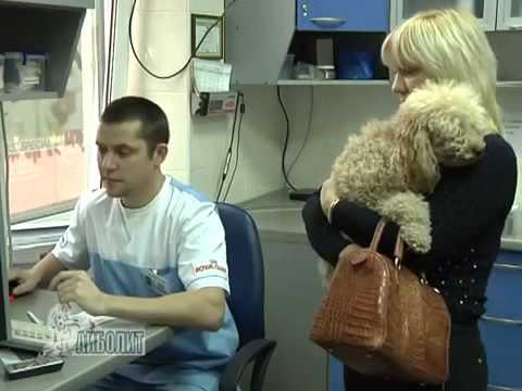 Лечение_мочекаменной_болезни_у_кошек