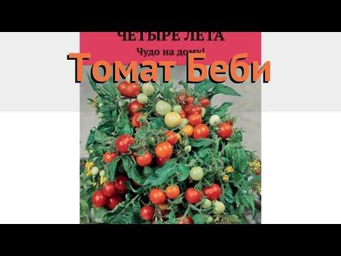 Томат обыкновенный Беби (bebi) 🌿 обыкновенный томат Беби обзор: как сажать, семена томата Беби