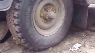 Крыса пыталась, но так и не смогла спрятаться от кошки