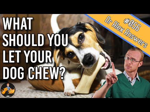 what-are-the-best-dog-chew-toys---nylabones-and-antler-or-are-there-better?---dog-health-vet-advice