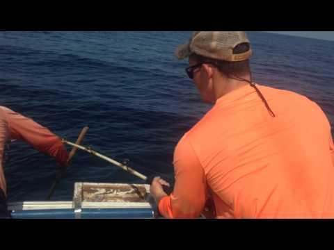 Panama City Beach Florida Offshore Fishing - Miss Kelley