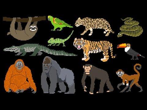 Rainforest Animals - Book Version - Primates, Big Cats, Reptiles & More - The Kids' Picture Show |