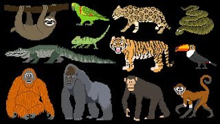 Rainforest Animals - Book Version - Primate, Big Cats, Reptiles & More - The Kids' Picture Show