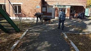 Собаки тренировались зеков ловить