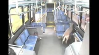 Олень запрыгнул в автобус через лобовое стекло Deer Bembi Jumps Through Bus Windshield ДТП! Авария!