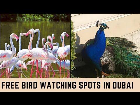 Watch These Flamingos/Peacocks For Free|Things To Do In Dubai|Zabeel Palace/Ras Al Khor Wildlife