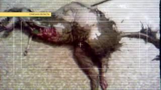 Смотреть видео чупакабра в сумской области видео