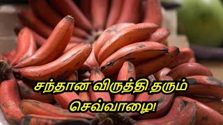 Benefits Of Banana in Tamil | Red Banana Nutrition | Eat Red Bananas | Healthy Life - Tamil.