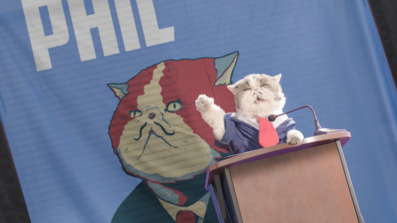 Cat Runs for Mayor