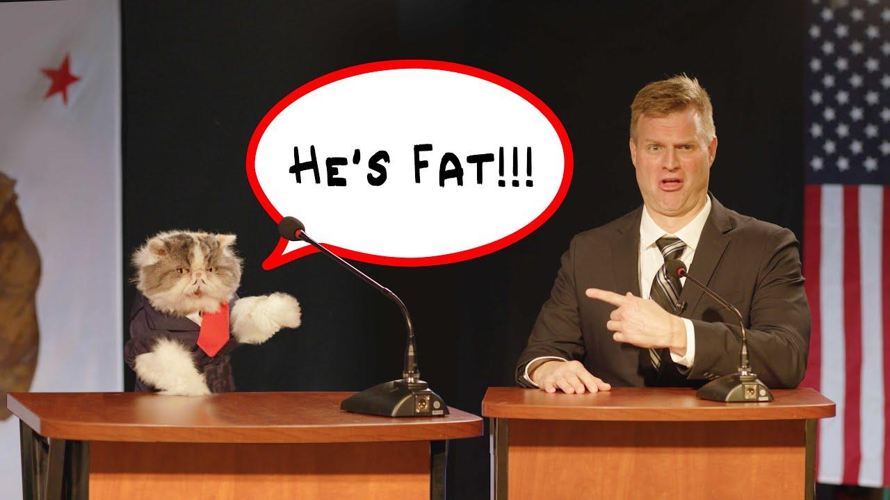 Political Cats