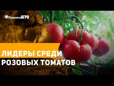 ЛИДЕРЫ среди РОЗОВЫХ ТОМАТОВ ✔️ Сорта розовых томатов от Планета Агро 🍅 | планетаагро | помидоры | томатов | розовые | большие | агроном | томаты | теплиц | семена | лидеры