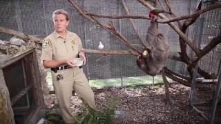 Jail petting zoo: Inmates save exotic animals