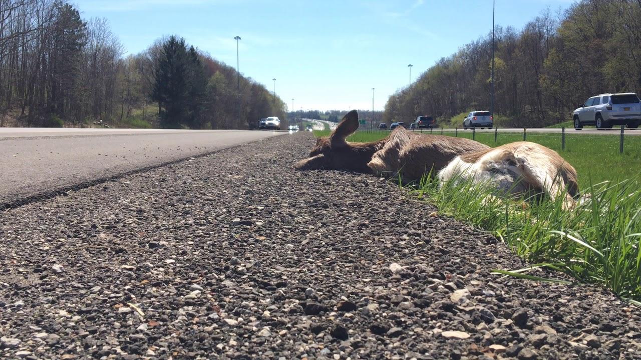 Interstate 71 (Deer)