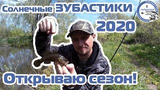 Солнечные ЗУБАСТИКИ - 2020. Весенний РОТАН. Открываю сезон