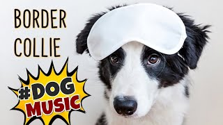 Music for Dogs ~ BORDER COLLIE Music for dog to Relax ~ Sleep music for Dogs