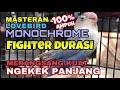 Masteran Lovebird Monochrome Fighter Durasi Merangsang Kuat Ngekek Panjang Audio(.mp3 .mp4) Mp3 - Mp4 Download