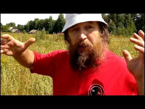 Чернобыльник трава - полынь обыкновенная, применение