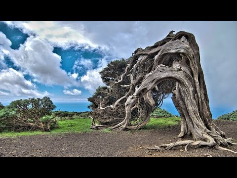 6 of The Oldest Trees In The world-Kya Ap Jante Hein?