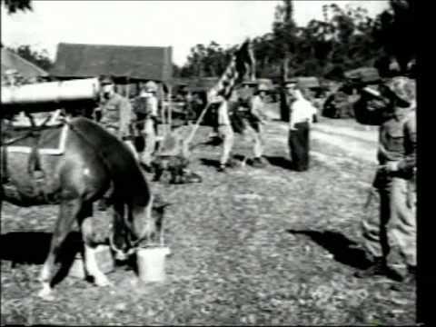 Sgt Reckless - Korean War Horse Hero