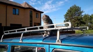 Аренда крыши авто для КОТА!!!)