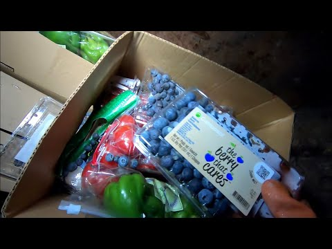 Dumpster Diving Aldi For Free Food #16 - Happy Thanksgiving!