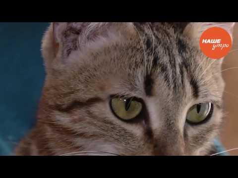 Лишай от кошки передается человеку? Можно заразиться