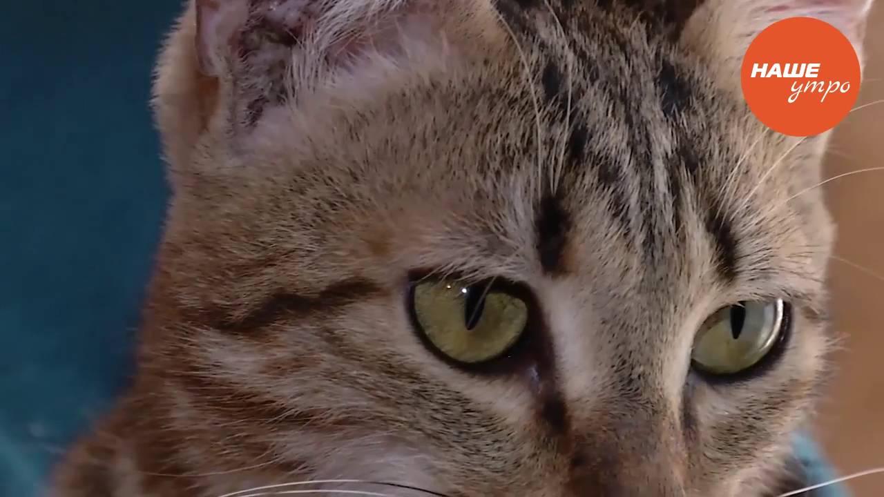 лишай кошачий фото